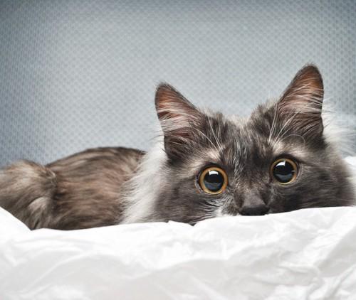 瞳が大きい猫
