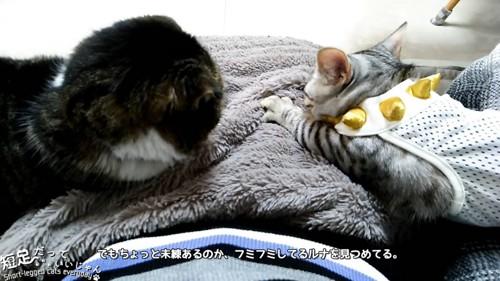 子猫を見つめる黒系の猫