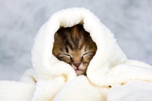 暖かいタオルに包まれている子猫