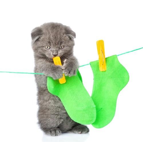 靴下を干したロープに手をかける子猫