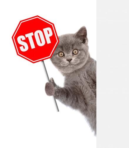 STOPの看板を持った猫