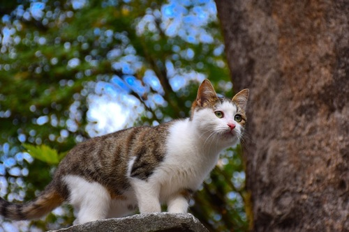 木の上を歩く猫