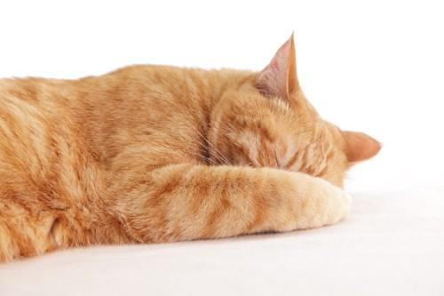 顔を隠す茶トラ猫