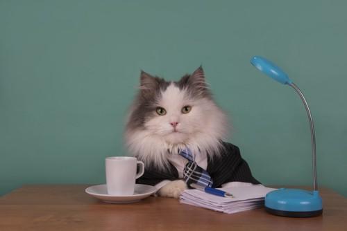 スーツを着てデスクワークをする猫