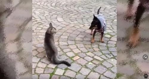 座った猫と犬