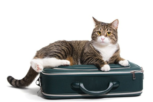 カバンに乗る猫