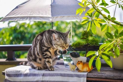 テーブルの上でくつろぐ猫