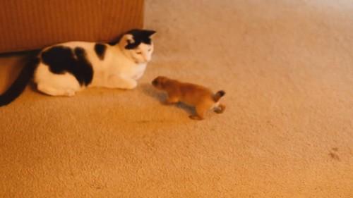 猫に近づくプレーリードッグ