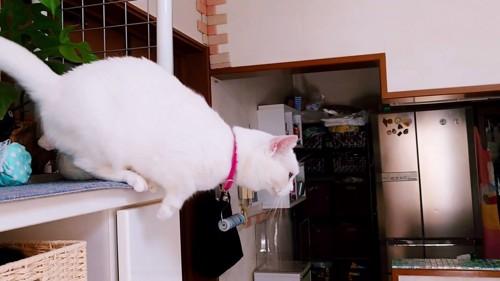 飛び降りる猫の横顔