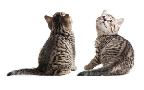 遊んでいる2匹の子猫