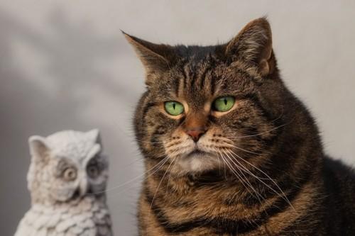 石のフクロウと猫
