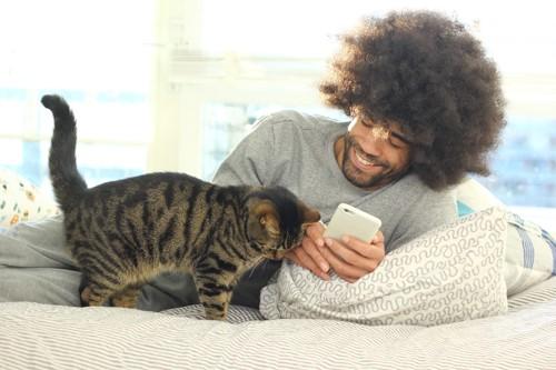 スマホを持つ男性に近寄る猫