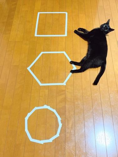 猫ホイホイの横で寝そべる黒猫