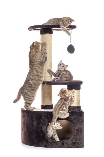 キャットタワーで遊んでいる猫たち