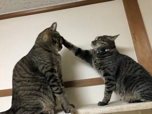 猫を叩く猫