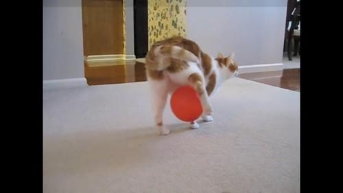 変な歩き方の猫