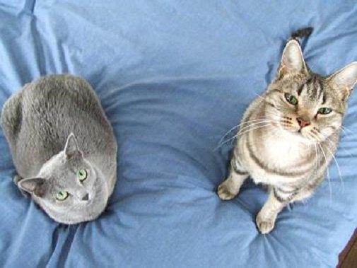 猫2匹が並んでいる写真