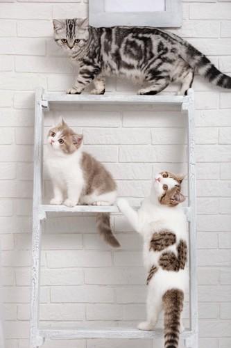 白い棚に群がる猫たち