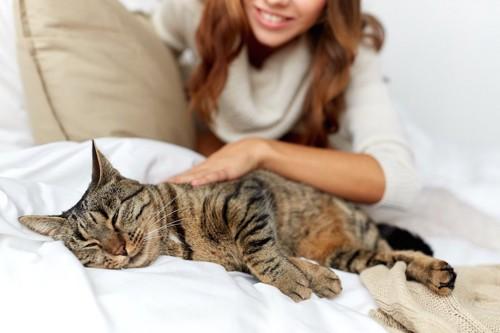 ベッドで眠る猫を撫でる飼い主