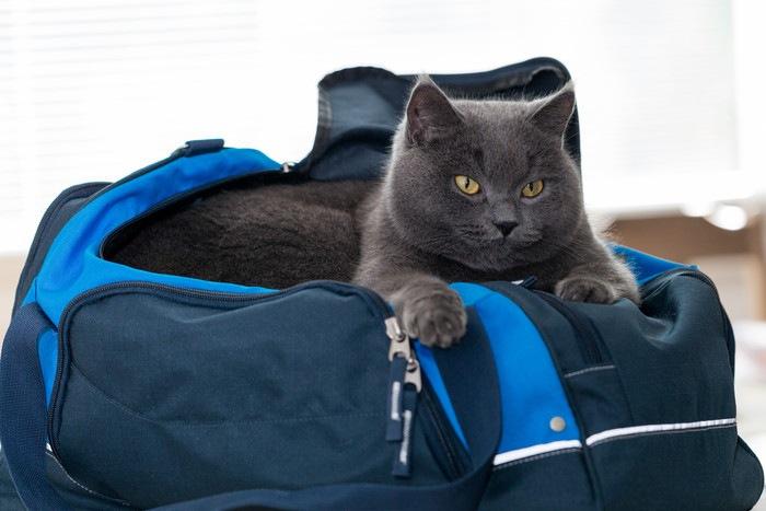 バッグの中にいる猫