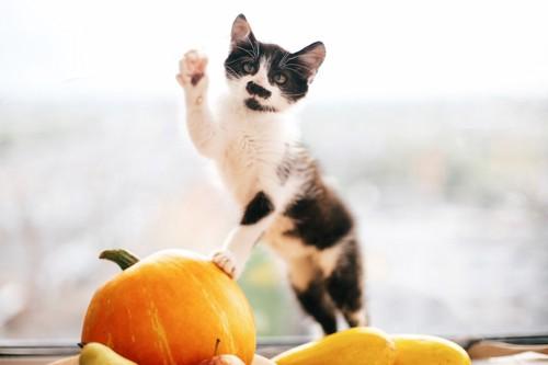 カボチャに前足を乗せる猫