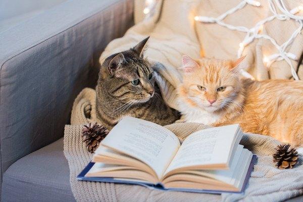 本と二匹の猫