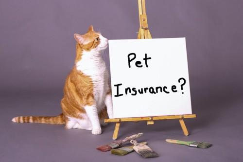 ペット保健の看板と猫