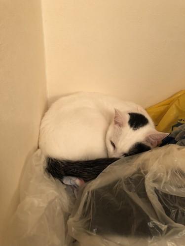 洗濯機の上で眠る猫