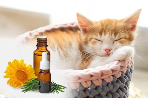エッセンシャルオイルと猫