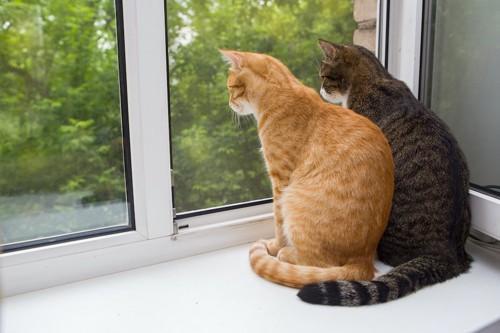 並んで窓辺に座って外を見る二匹の猫