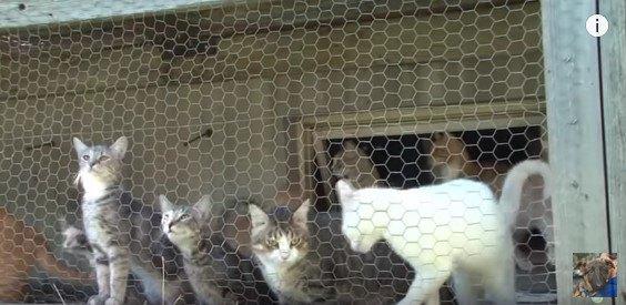 金網のそばに集まる猫