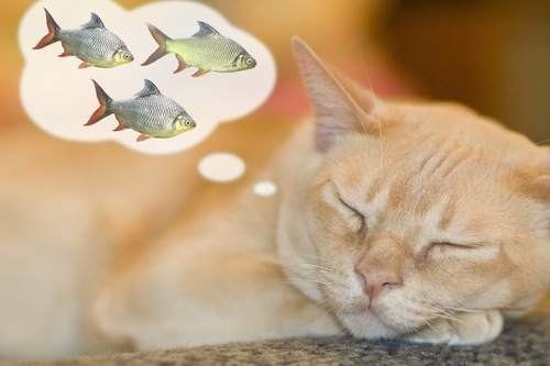 目を閉じて魚を考えている猫