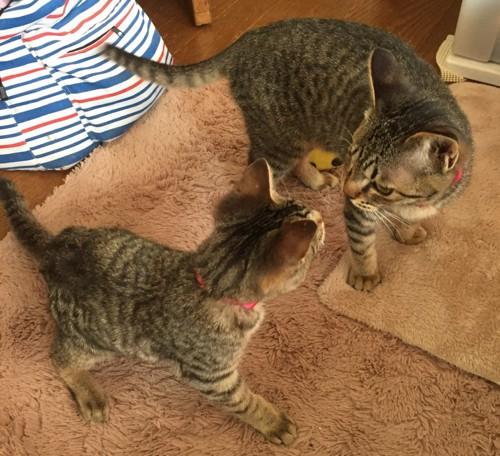 2匹で向き合っている猫