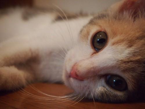 目の中に入れられるほどかわいい子です