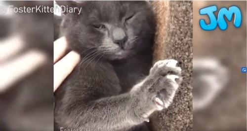 キャットタワーに横たわる猫