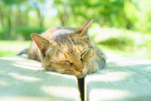 公園のベンチでうたた寝している猫