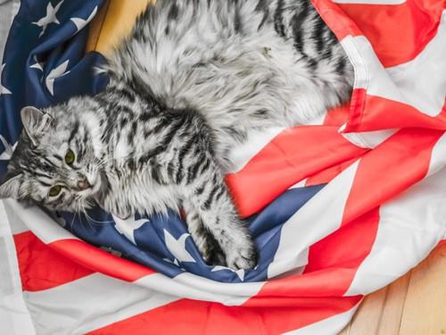 国旗の上に寝そべる猫
