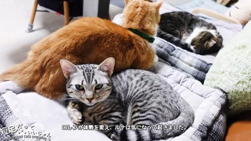 顔をあげる縞模様の猫