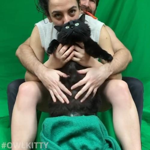 猫のおなか見せ
