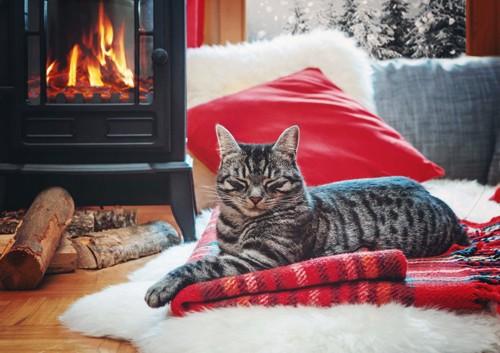 暖炉とブランケットの上の猫