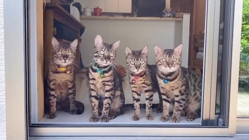 窓に並ぶ4匹の猫