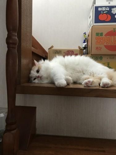 階段でうなだれる猫