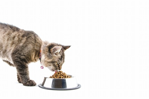 ドライフードを食べている猫