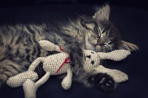 ぬいぐるみに寄り添う猫