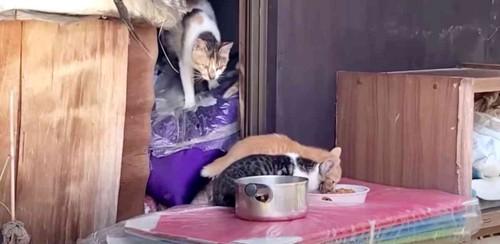 空き家にいる猫たち
