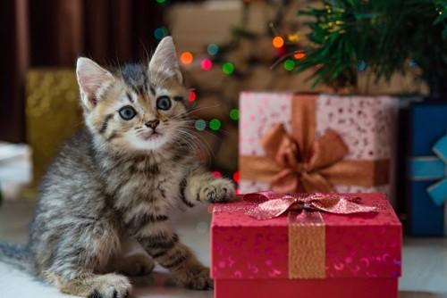 プレゼントを差し出す子猫