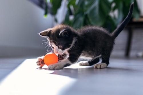 ボールと遊ぶ猫
