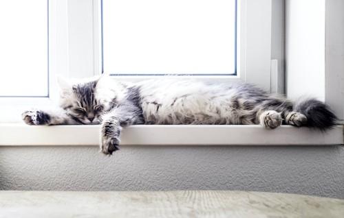 陽の当たる窓辺で眠っている猫