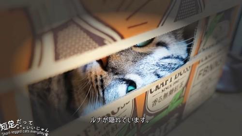 隙間から見える猫の顔