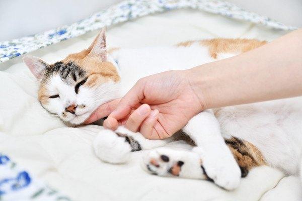 猫を撫でる